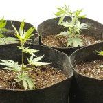 How to design and build a marijuana grow room indoors