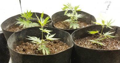 How to design and build a marijuana grow room
