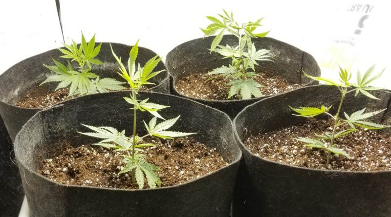 How to design and build a marijuana grow room