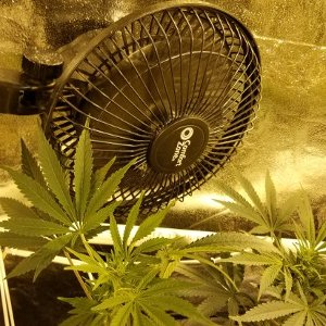What size fans are needed for proper air circulation in marijuana grow tents & What size fans are needed for proper air circulation in marijuana ...