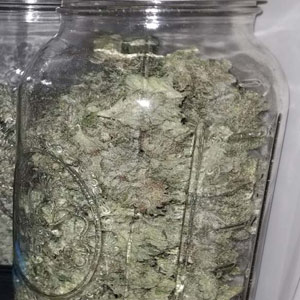 Curing weed: How to cure marijuana