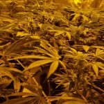 Secret Jardin Grow Tents for Marijuana