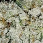 Flushing weed: how to flush marijuana plants