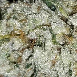Flushing weed: how to flush marijuana plants