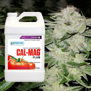How to use Calmag Plus with Marijuana plants